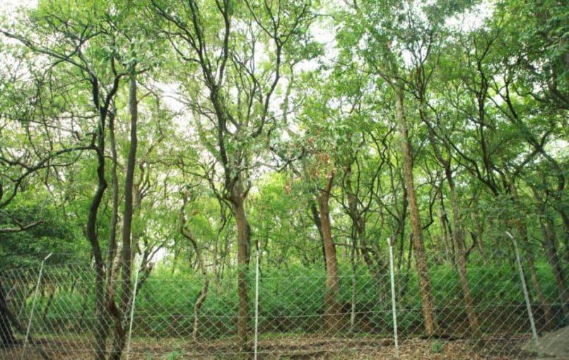 ChandanTree (sandalwood tree) Medical Benefits in Hindi रंग : लाल चंदन लाल रंग का होता है। स्वाद : इसका स्वाद तीखा होता है। स्वरूप : चंदन अनेक जातियों का होता है और पहाड़ों तथा घने जंगलों में पाया जाता है। इसके वृक्ष भारी और लंबे होते हैं। वैसे तो चंदन बहुत प्रकार के होते हैं […]